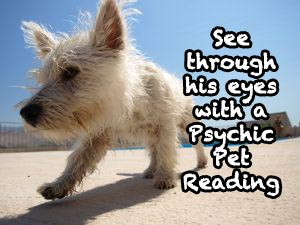 Get in the mind of your pet with a psychic pet reading